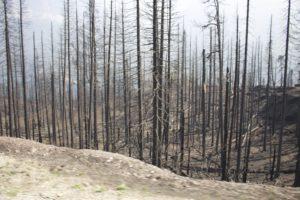 2015_trip2_forestfire